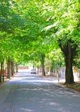 Leafy suburbs Royalty Free Stock Photography