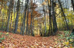 Leafy track in forest Stock Photography