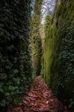 Leafy trail walls Stock Photography