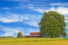 Leafy tree in countryside Stock Photography