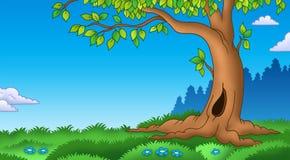 Leafy tree in grassy landscape. Color illustration Stock Photo