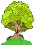 Leafy tree on hill Royalty Free Stock Photo