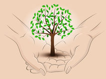 Leafy tree hold two human hands across vector Royalty Free Stock Photography