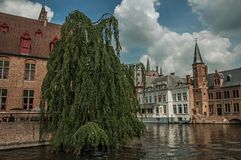 Leafy tree with old brick buildings on the canal`s edge in a sunny day at Bruges. Royalty Free Stock Images