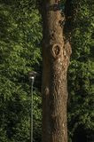 Leafy tree trunk and street lamp in a park in Tielt. Leafy tree trunk and street lamp in a park at sunset in Tielt. Charming and quiet village in the countryside stock photo