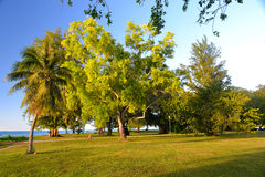Leafy Treeline and Lush Lawn in a Beautiful Green Park Royalty Free Stock Images