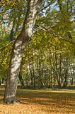 Leafy trees in autumn park. Scenic view of leafy trees in picturesque autumn park Stock Photography