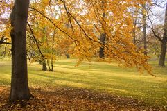 Leafy trees in autumn park. Scenic view of leafy trees in autumnal park Stock Photos