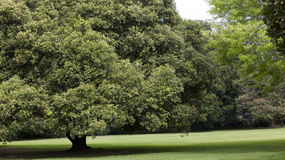 Leafy trees in park Stock Image
