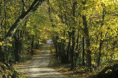 Leafy trees shade a narrow road in rural New England Royalty Free Stock Photography
