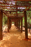 Leafy tunnel. Auroville Stock Image