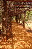 Leafy tunnel. Auroville Royalty Free Stock Photo