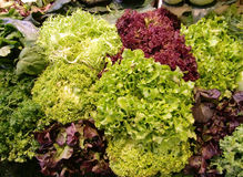 Leafy vegetables. Closeup of whole green and red leafy vegetables for salad on display Royalty Free Stock Photo