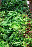 Leafy vegetables. Stock Photo