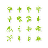 Leafy vegetables Stock Photography