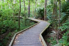 Leafy walkway Royalty Free Stock Photography