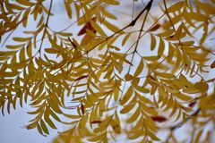 Leafy wallpaper. Fall leaves full this wallpaper stock image
