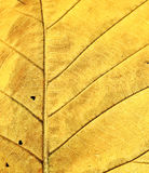leafyellow Royaltyfri Foto