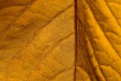 leafyellow Arkivbilder