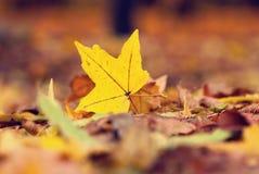 leafyellow Arkivfoton