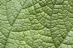 Leafyttersida Arkivbild