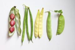 Leagumes beans Stock Images