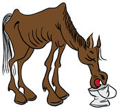 A lean horse. Skinny cowboy horse drinks water from a bucket. Vector illustration Stock Photos
