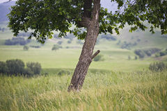 Lean tree Stock Images
