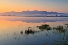 leane de lac Photos libres de droits