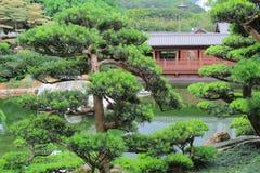 Leaning bonsai tree, Chi Lin Nunnery, Hong Kong Royalty Free Stock Photo
