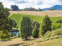 Leaning Church Vineyard, Tasmania stock photography