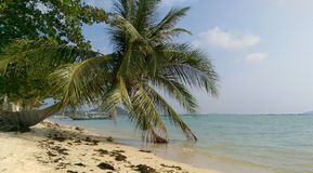 Leaning palm tree. Beach in Koh Samui Thailand Royalty Free Stock Photos