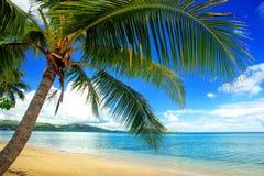 Leaning palm tree at the beach, Nananu-i-Ra island, Fiji Stock Photography