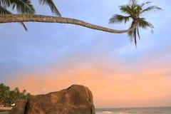 Leaning palm tree with big rocks, Unawatuna beach, Sri Lanka Stock Image