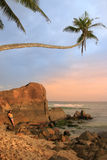 Leaning palm tree with big rocks, Unawatuna beach, Sri Lanka Royalty Free Stock Images