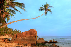 Leaning palm tree with big rocks, Unawatuna beach, Sri Lanka Stock Photo
