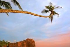 Leaning palm tree with big rocks, Unawatuna beach, Sri Lanka Royalty Free Stock Photography