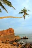 Leaning palm tree with big rocks, Unawatuna beach, Sri Lanka Royalty Free Stock Photos