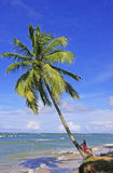 Leaning palm tree at Las Terrenas beach, Samana peninsula Royalty Free Stock Image