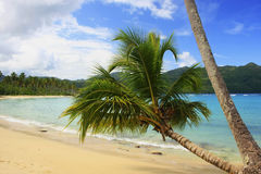 Leaning palm tree at Rincon beach, Samana peninsula Stock Photo