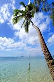 Leaning palm tree with rope swing at Pangaimotu island near Tong. Atapu island in Tonga. Kindom of Tonga is an archipelago comprised of 169 islands Royalty Free Stock Images