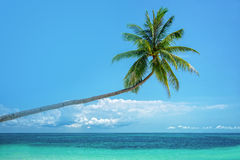 Leaning palm tree and sea Stock Photo