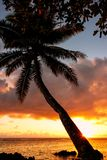 Leaning palm tree at sunrise in Lavena village on Taveuni Island, Fiji royalty free stock image