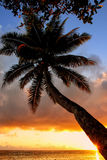 Leaning palm tree at sunrise in Lavena village on Taveuni Island Royalty Free Stock Images