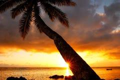 Leaning palm tree at sunrise in Lavena village on Taveuni Island Royalty Free Stock Photos