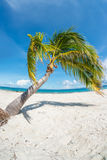 Leaning palm tree on tropical beach. Palm tree on the tropical beach of Kalanggaman island, with view of Leyte in the distance. Philippines, November Stock Photography