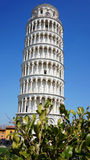 The Leaning Tower of Pisa with green plants, Italy Stock Image