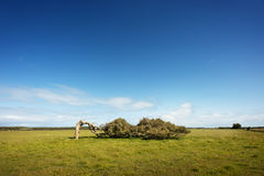 Free Leaning Tree Royalty Free Stock Photo - 38885815