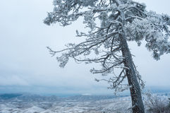 Leaning tree on the background of white winter sky. Leaning tree on the background of winter sky Stock Photos