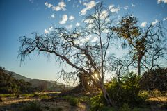 Leaning Tree in California Wilderness Stock Photos